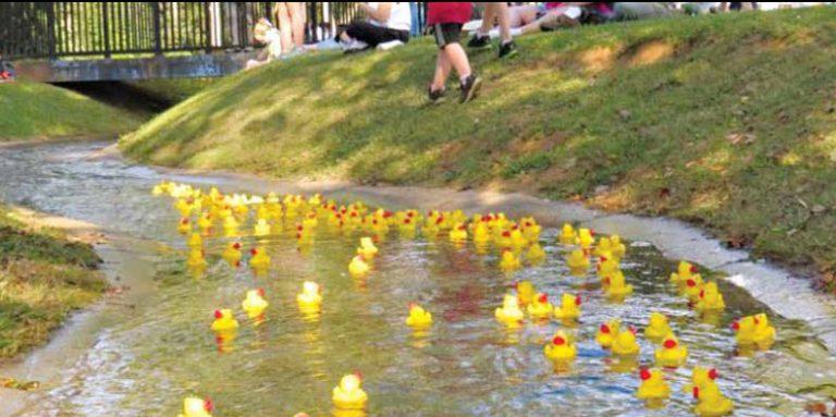 Wacky Quacky Ducky Derby