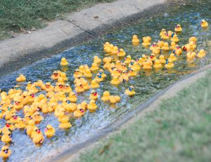 Read more about the article Wacky Quacky Ducky Derby
